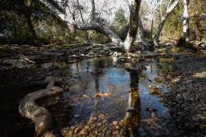 Los Penasquitos Creek